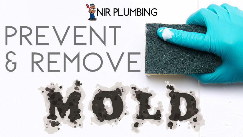 Prevent and Remove Mold